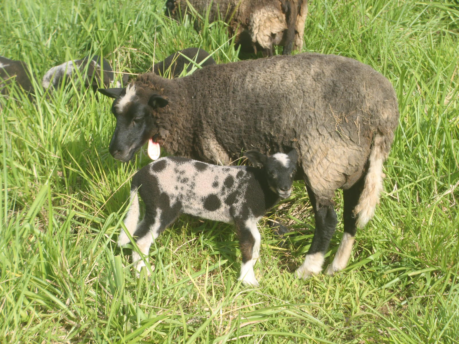 Forest and her ewe lamb