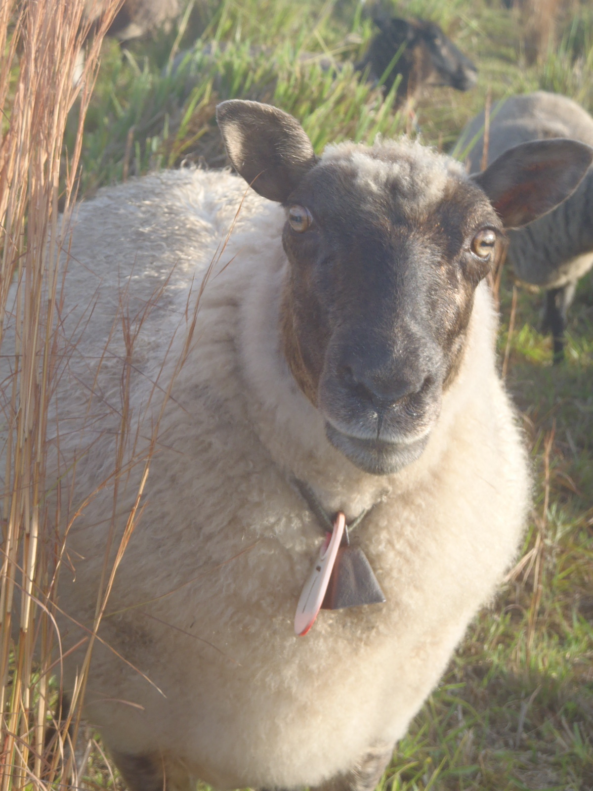 Sheep and wool crafts, click here.